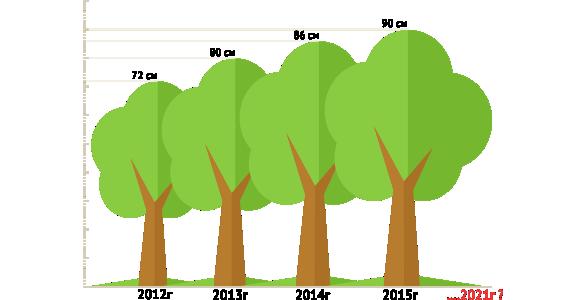 закономерность роста дерева