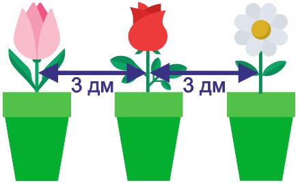 определи расстояние между цветками